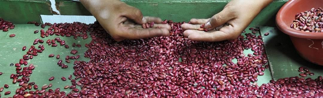 Producción en Nicaragua